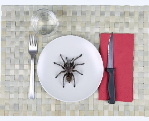 insect_food_151